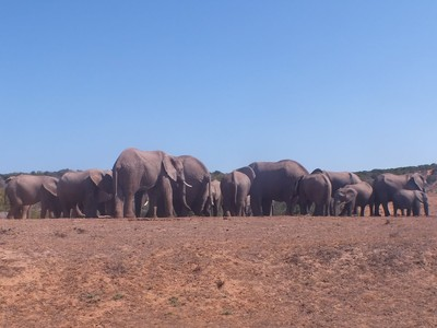 watching elephants at the Addo Elephant Park